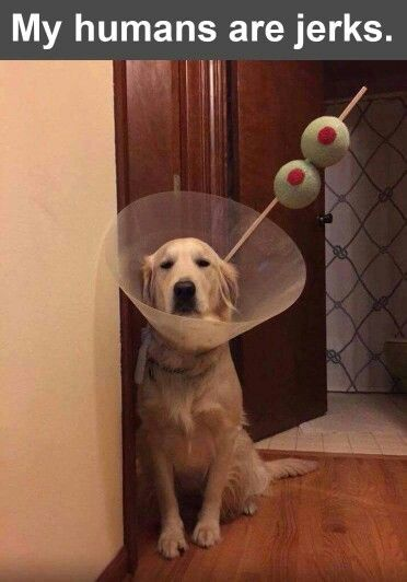 Funny Martini Dog Costume Picture